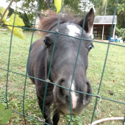 "My new next door ""neigh"" bor Misty Blue!"